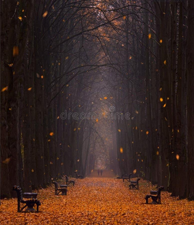 Autumn Foggy Park Avenue With een Paar Minnaars met Veel die Oranje Gevallen Bladeren en Bladeren, in de Wind wervelen Twee mense royalty-vrije stock foto's