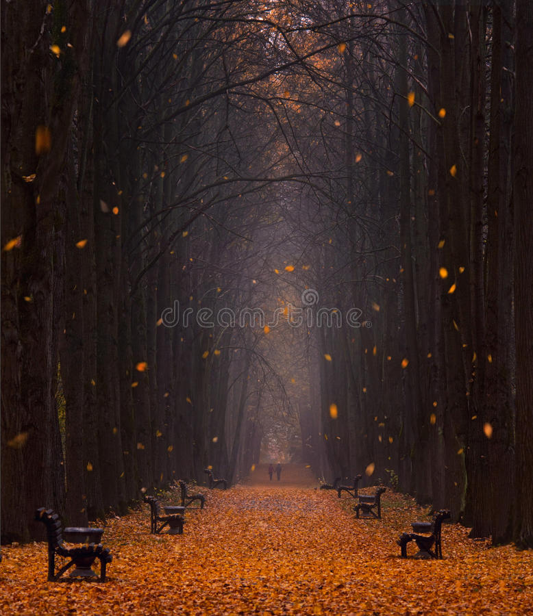 Autumn Foggy Park Avenue With A Pair Of Lovers With Lots Of Orange Fallen Leaves And Leaves,Whirling In The Wind.Two People. royalty free stock photos