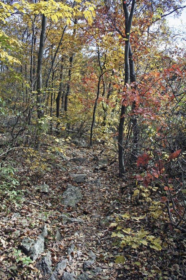 Free Autumn Foliage Stock Photography - 12044952