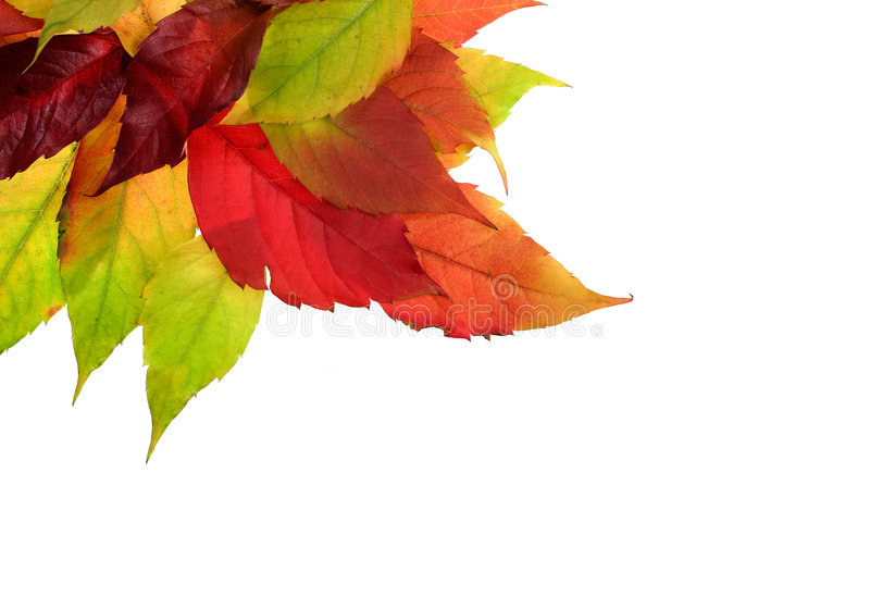 Download Autumn Foliage Stock Images - Image: 1404834