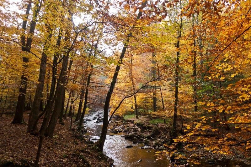 Download Autumn foliage stock image. Image of province, hockai - 26105923