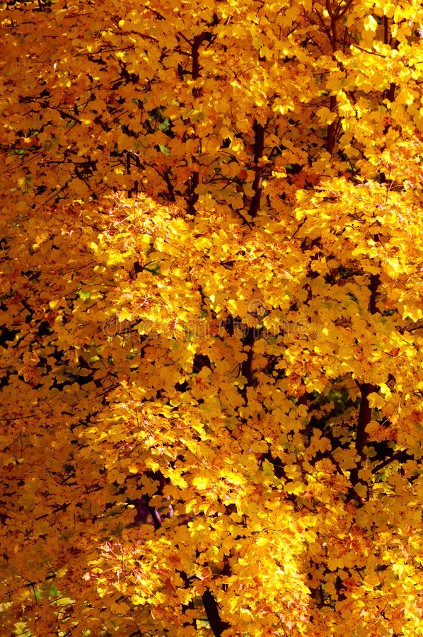 Download Autumn Foliage Background stock photo. Image of natural - 7534262