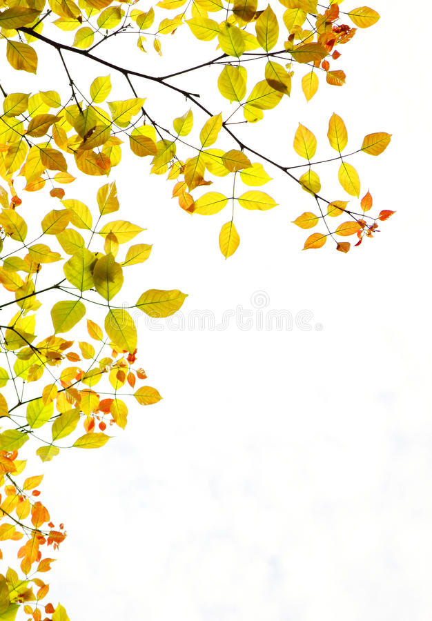 Free Autumn Foliage Background Copy Space Stock Photography - 11100972