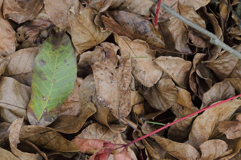 Autumn foliage brown royalty free stock photography