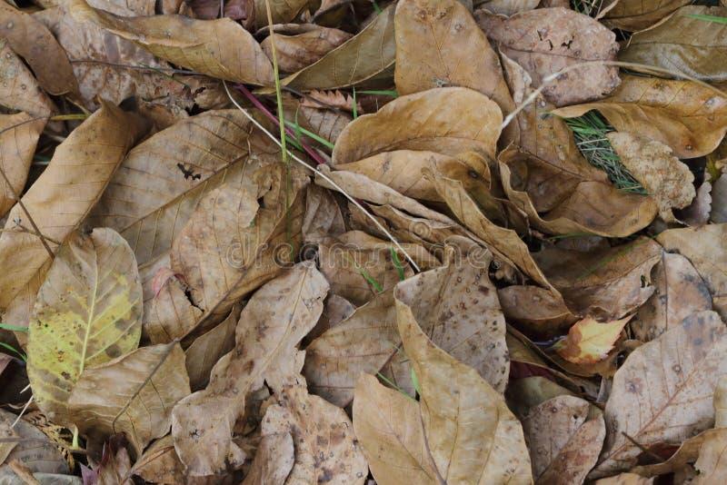 Autumn foliage brown stock images