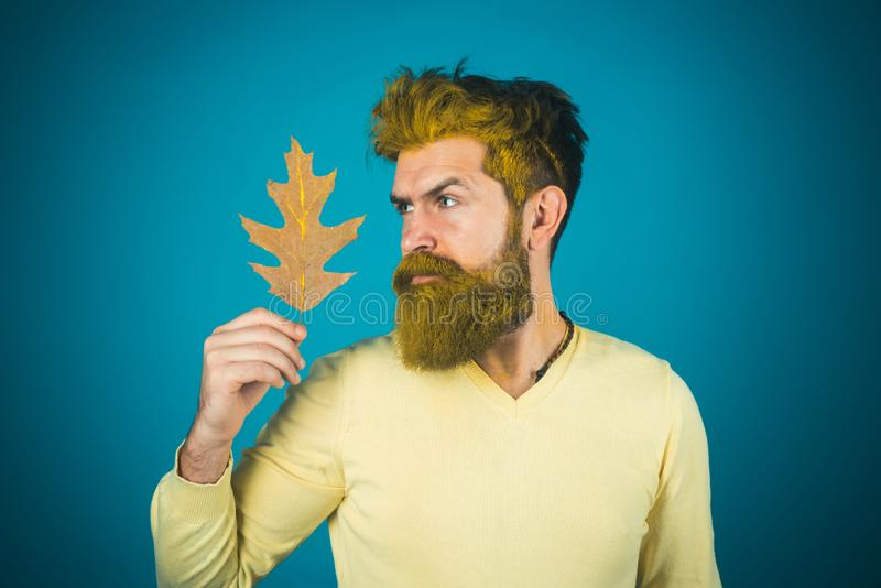 Autumn foliage concept. Cheerful autumn man in park on  background. Male autumn fashion concept. stock photography