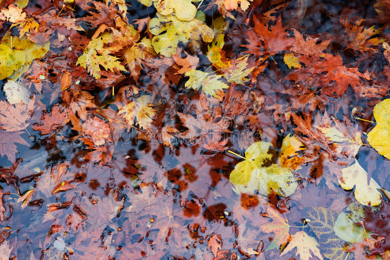 Autumn foliage. Details of autumn foliage in a water pond royalty free stock photography