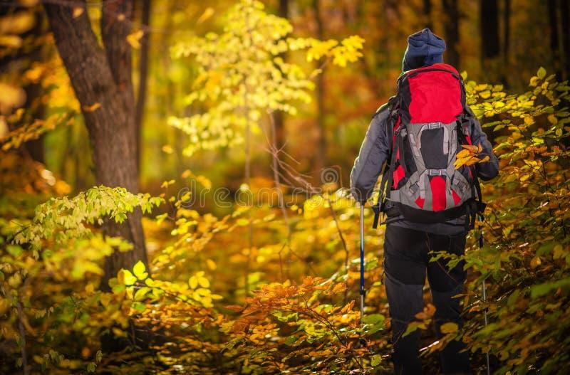 Autumn Foliage Exploring royalty-vrije stock foto