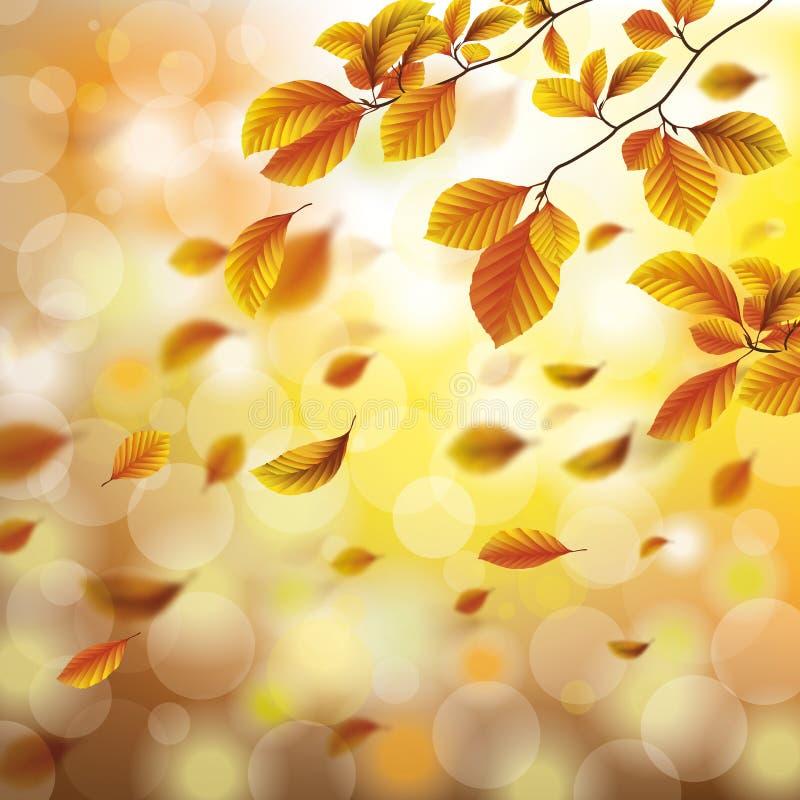 Autumn Foliage Fall Beech Sunlights illustration de vecteur