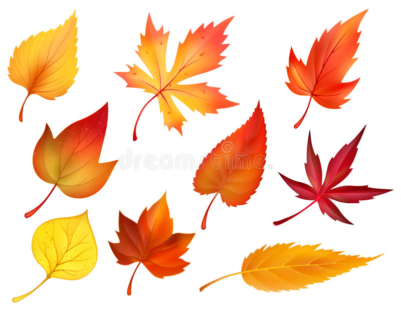 Autumn foliage of fall falling leaves vector icons stock illustration
