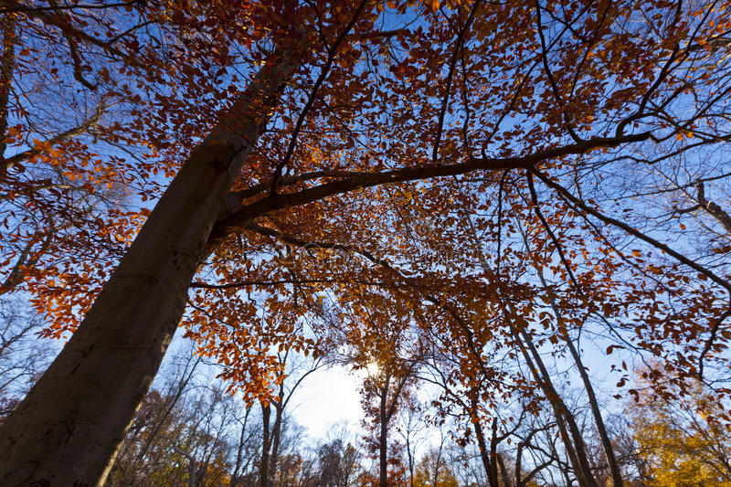 Download Autumn Foliage The Forest Royalty Free Stock Photo - Image: 23072245