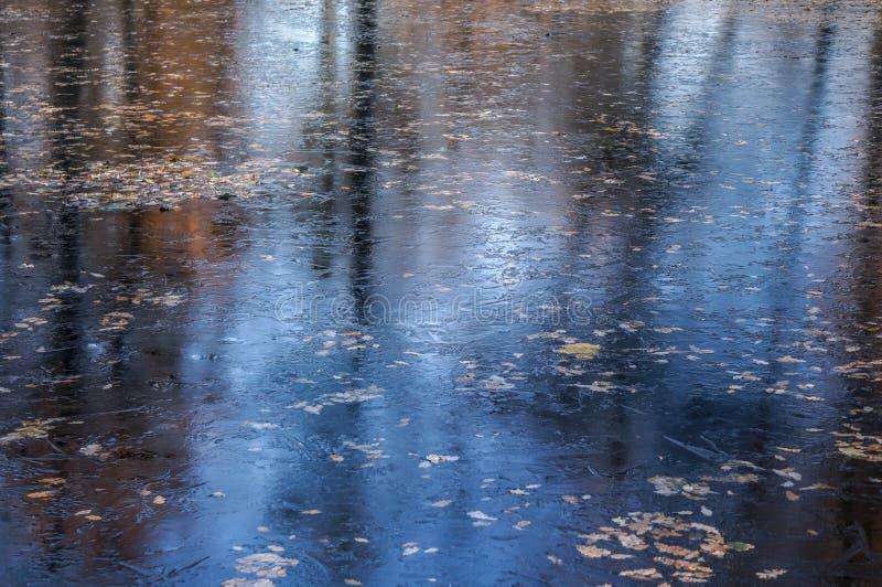 Autumn foliage frozen in ice royalty free stock image