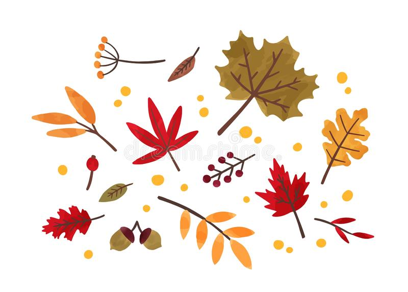 Autumn foliage hand drawn vector illustrations set. Different trees dried leafage and berries isolated on white. Background. Fall season forest flora. Maple stock illustration