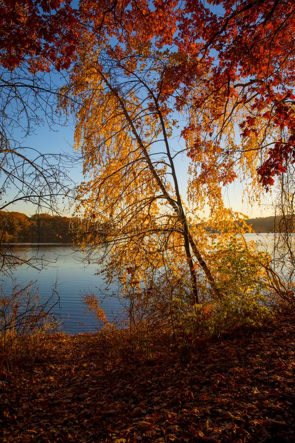 Autumn foliage on the lake. Autumn reflections of foliage in the lake, beautiful and sunny day in fall royalty free stock photography