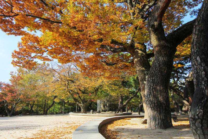 Autumn foliage in a park in Korea. Colorful autumn foliage at a park in Korea stock images