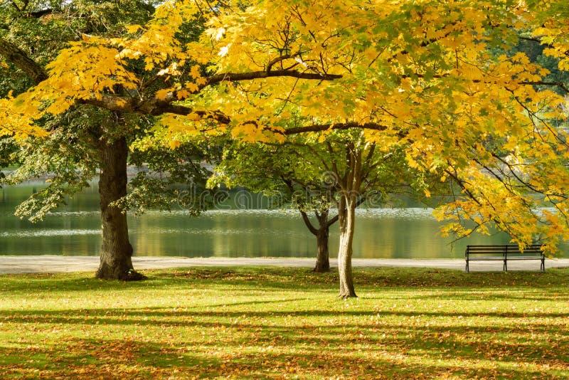 Autumn Foliage By The Pond de oro imagenes de archivo