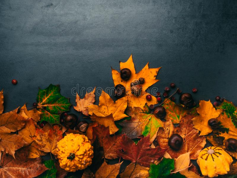 Autumn foliage with pumpkins, acorns, chesnuts for Thanksgiving and fall holidays. Bottom border background with copy space stock photography
