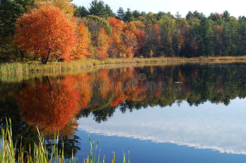 Autumn foliage reflected royalty free stock photos