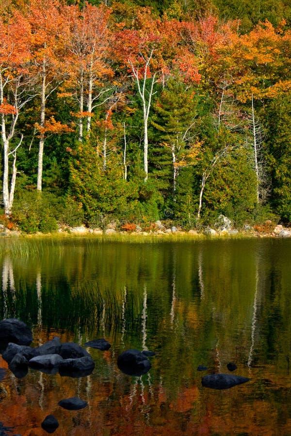 Autumn Foliage Reflected dans l'étang au parc national d'Acadia images libres de droits