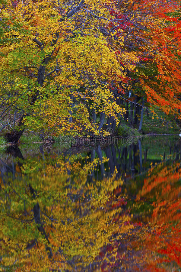 Autumn foliage reflection in lake royalty free stock images