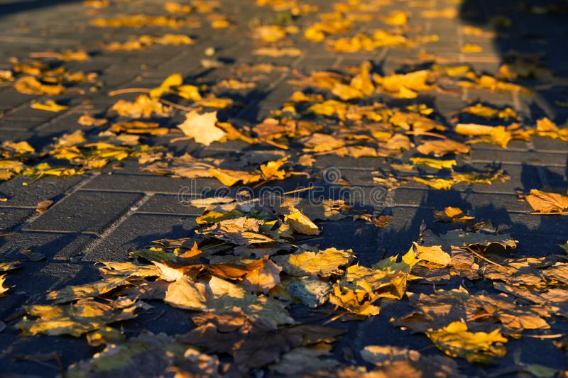 Autumn foliage on a sidewalk with hard shadows stock photography