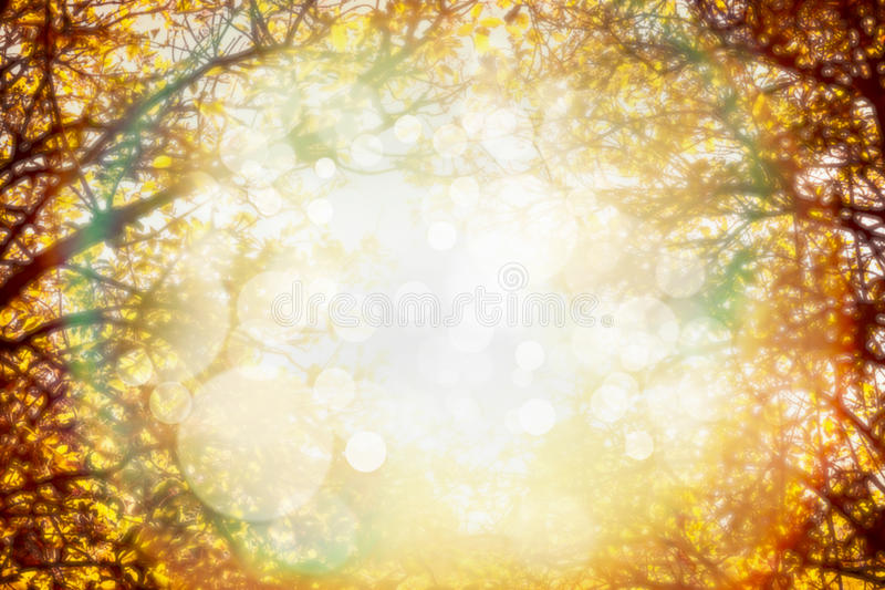 Autumn foliage on trees over sun light in garden or park. Blurred fall nature background. royalty free stock image