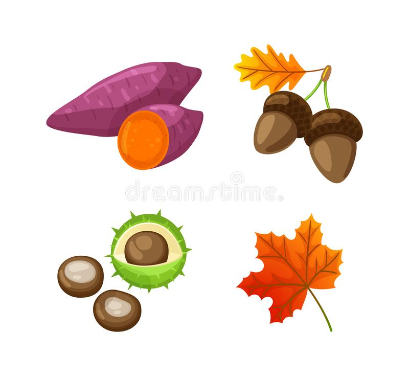 Autumn Food Beetroot and Acorn Isolated Vector. Autumn food beetroot and acorn isolated icons vector. Chestnut in peel, maple leaves and foliage, seasonal items royalty free illustration