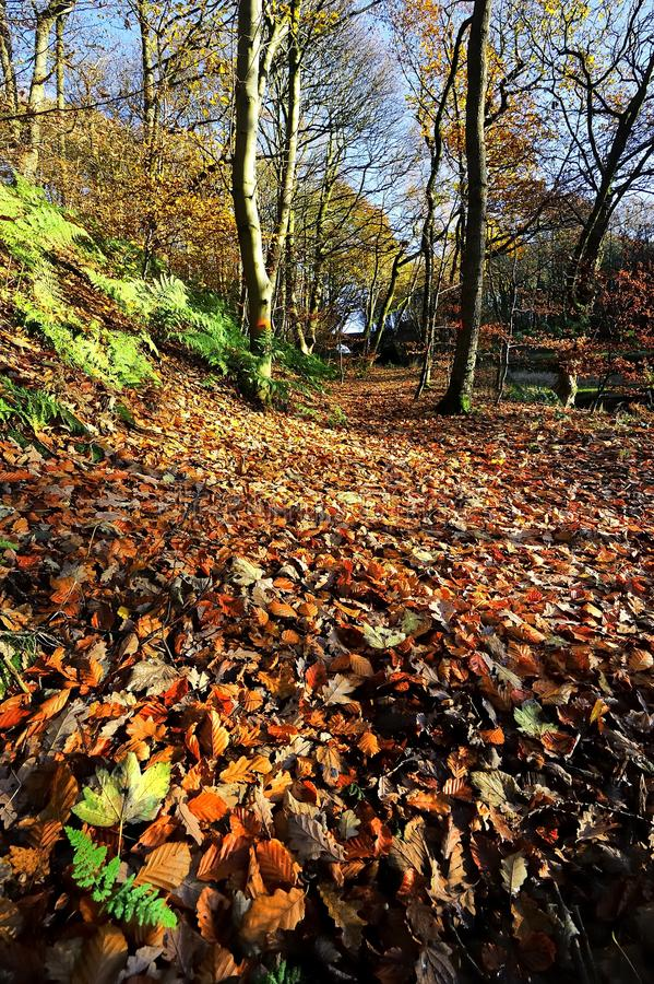Autumn Footpath royalty-vrije stock foto