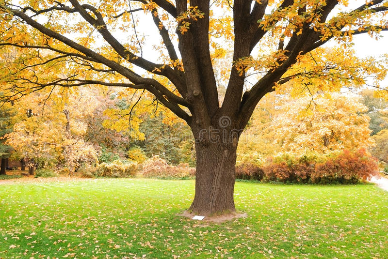 Download Autumn forest stock image. Image of autumn, fall, color - 10327097