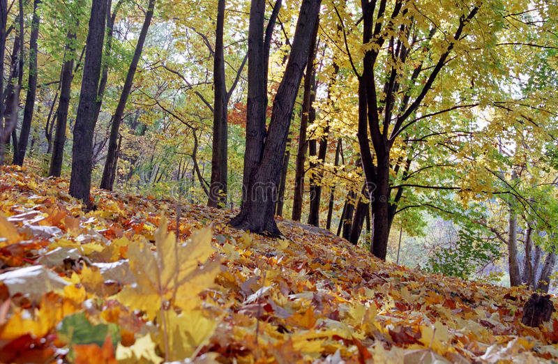 Download Autumn forest stock image. Image of landscape, nature - 12440889
