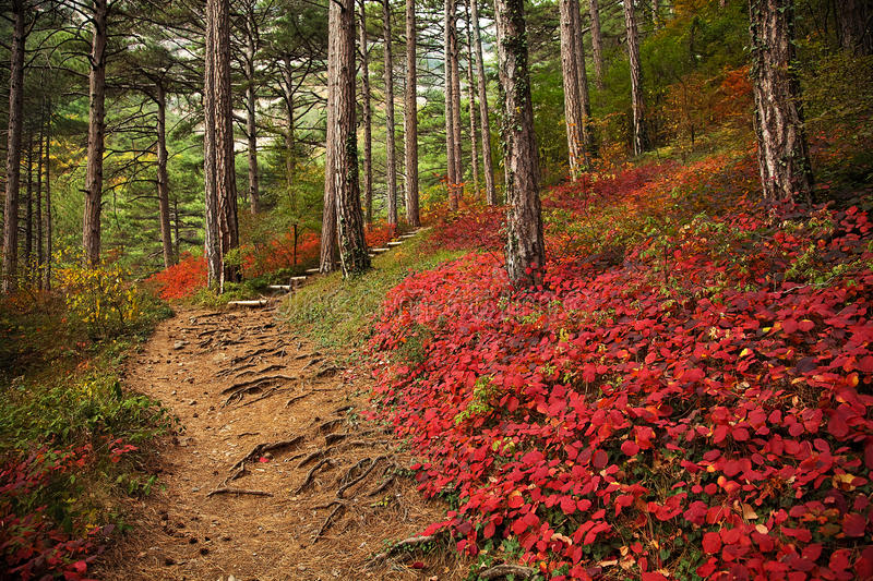 Download Autumn Forest Royalty Free Stock Images - Image: 12525039