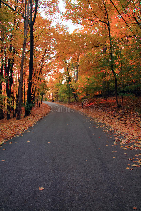 Download Autumn forest stock photo. Image of beauty, gait, november - 12568170