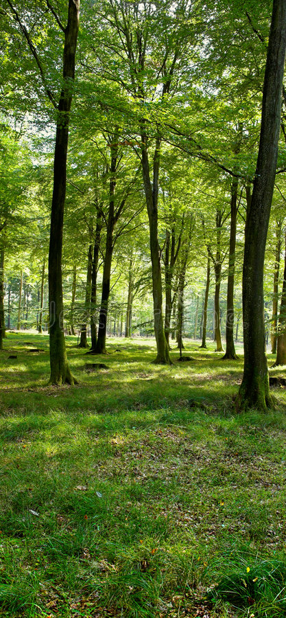 Download Autumn forest stock image. Image of flora, ground, november - 1420913
