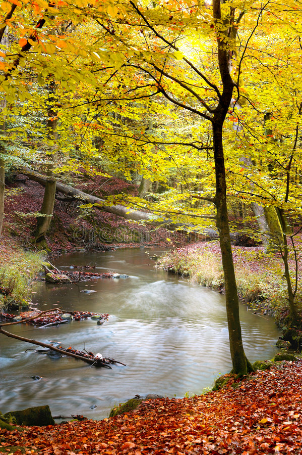 Download Autumn forest stock photo. Image of countryside, environment - 1421336