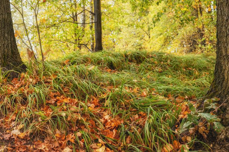 Autumn forest on a sunny day, multicolored  leaves stock photo