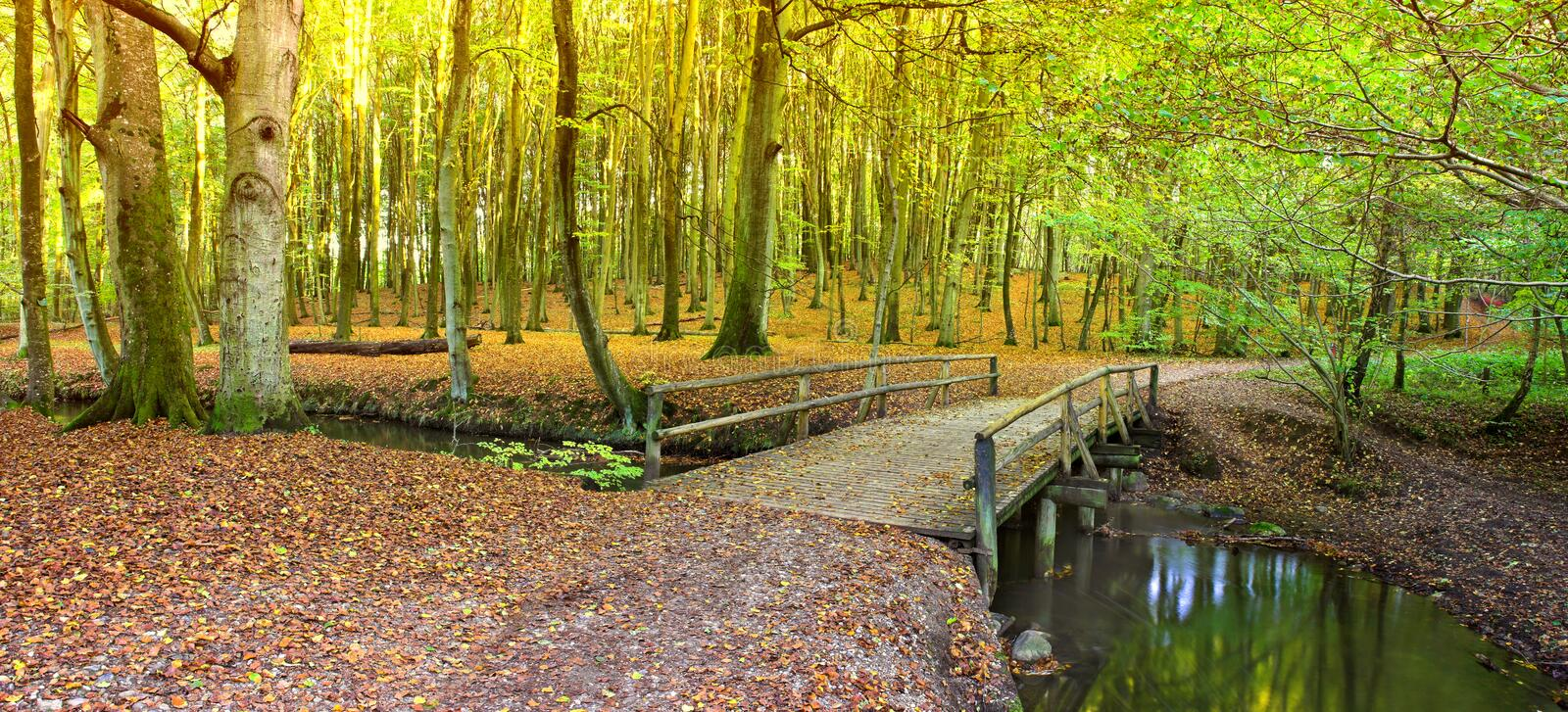 Autumn forest. With bridge and river royalty free stock images