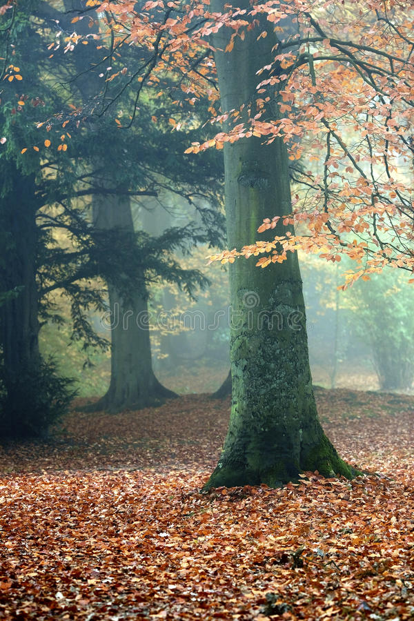 Free Autumn Forest Royalty Free Stock Images - 16744439