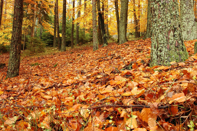 Download Autumn Forest Stock Photography - Image: 22179622