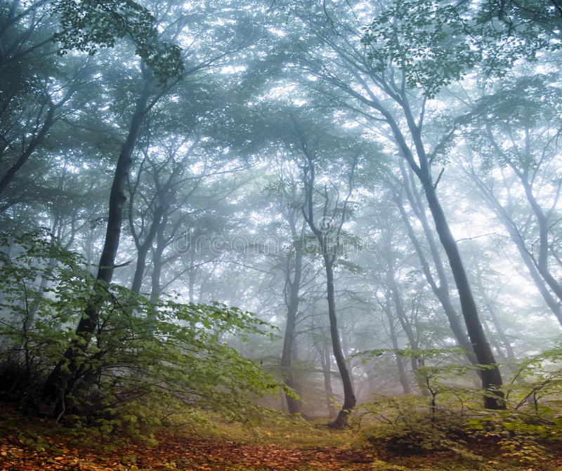 Download Autumn forest stock photo. Image of nature, trees, mountain - 22414460