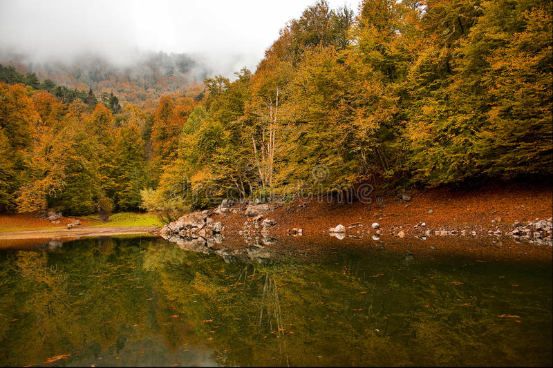 Download Autumn forest stock photo. Image of landscapes, forest - 24688760