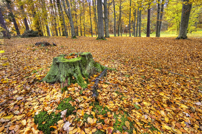 Download Autumn forest. stock photo. Image of nature, forest, landscape - 26624784