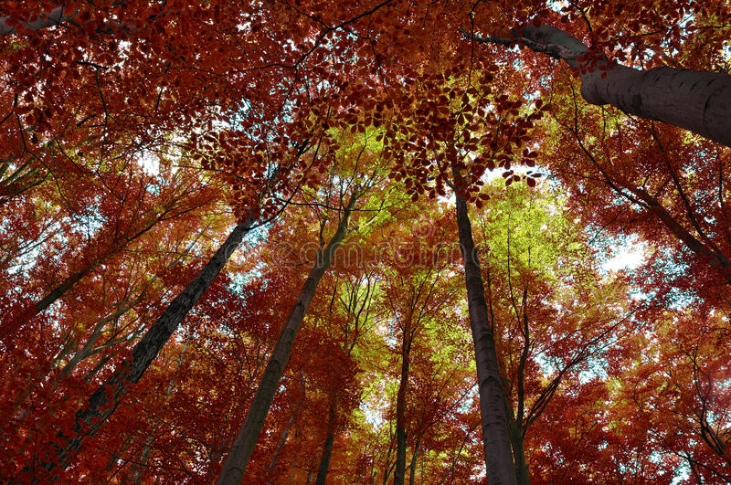 Download Autumn forest stock photo. Image of background, wallpaper - 26899090