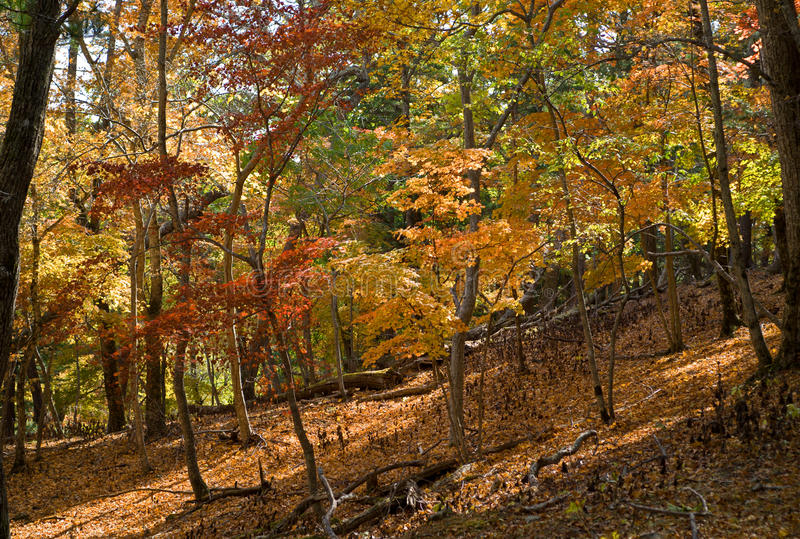 Autumn in forest 3 stock photos