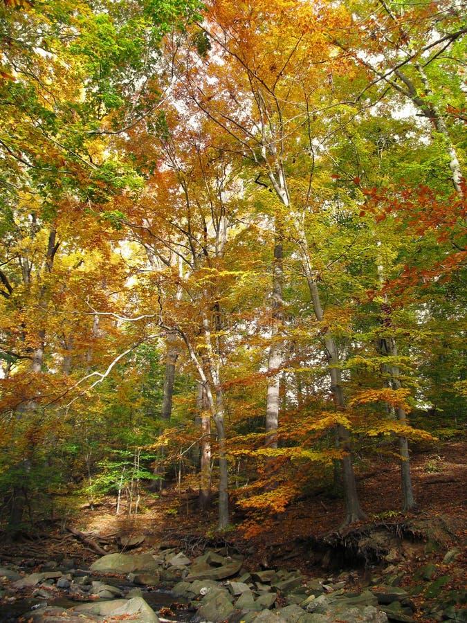 Autumn_Forest fotos de archivo