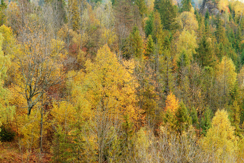 Download Autumn forest stock image. Image of woods, beautiful, autumn - 3327193