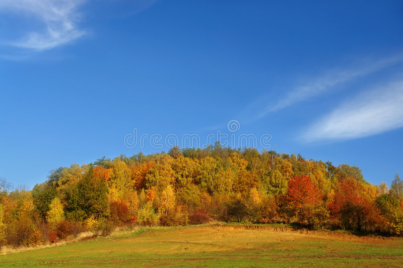 Download Autumn forest stock photo. Image of outdoors, trees, foliage - 3511704