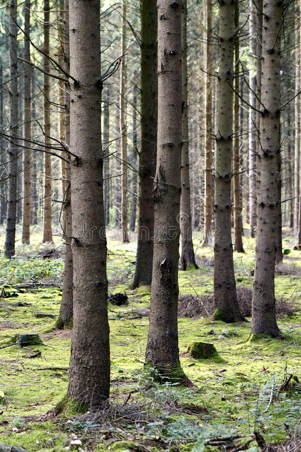 Free Autumn Forest Stock Photography - 35440922