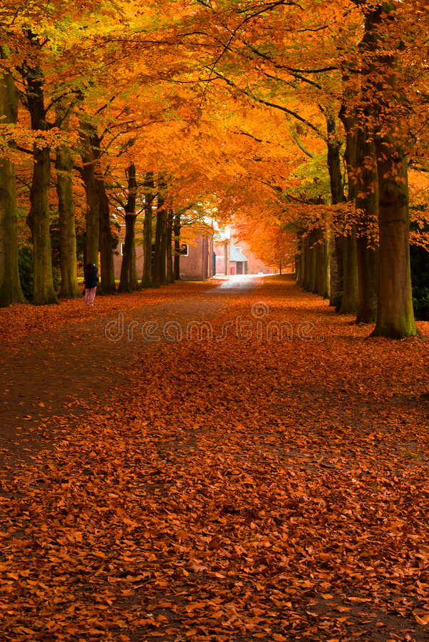 Autumn in the forest royalty free stock image