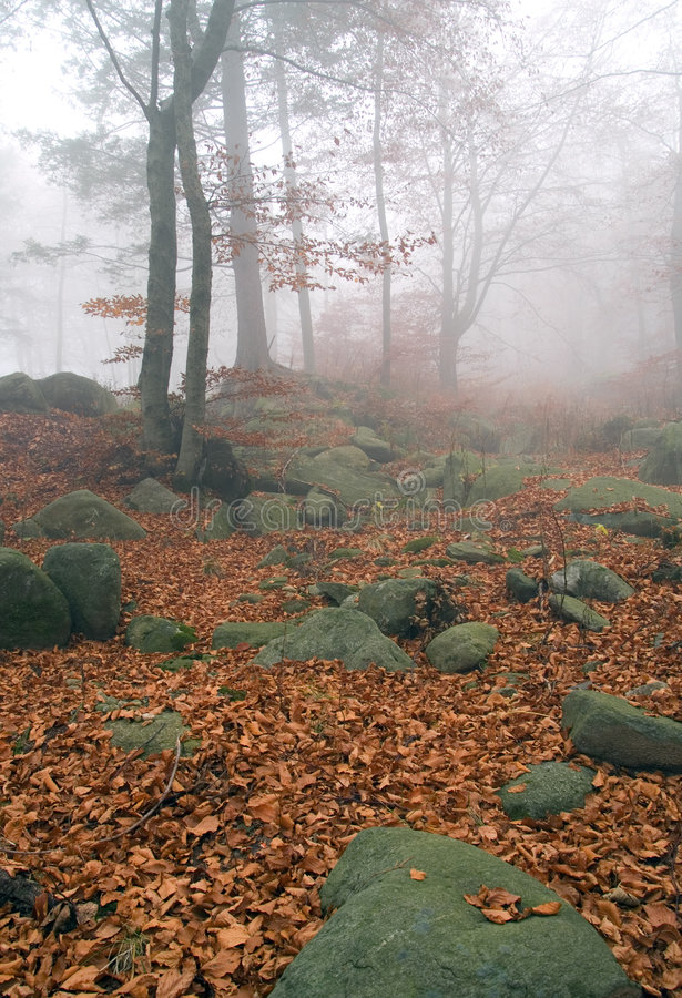 Download Autumn Forest Stock Photos - Image: 3579473