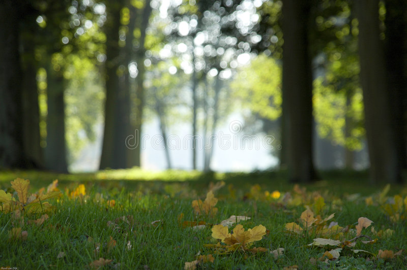 Download Autumn forest stock image. Image of meadow, nature, plants - 3939653